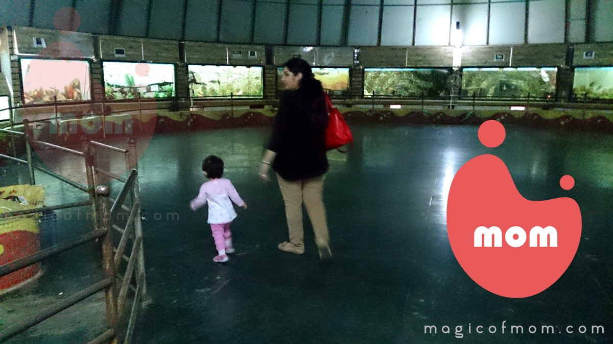 Fish aquarium in vile parle timing - Dolphin Aquarium